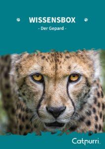 Catpurri Wissensbox Der Gepard
