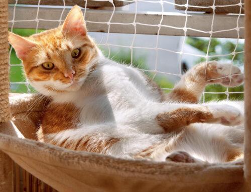 Katzengerechte Einrichtung