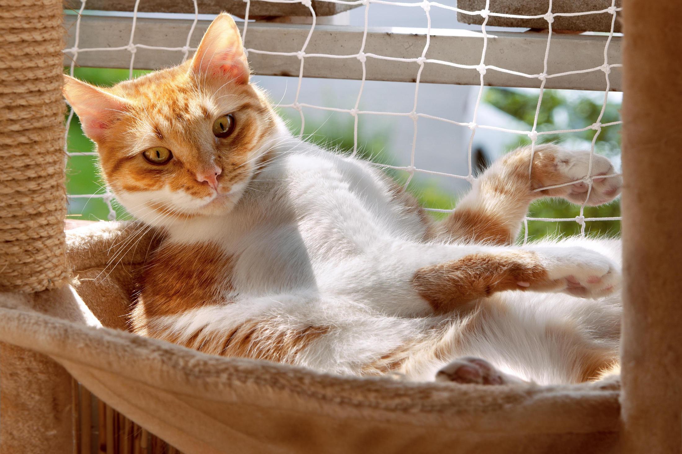 Artgerechtes Zuhause für Katzen