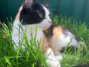 Ein Paradies im Katzengras