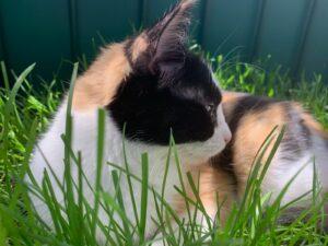 Milly im Katzengras-Paradies
